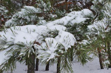Kempingas Žiemą